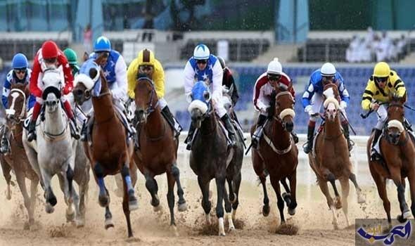 """79 حصانًا في صراع مثير للفوز بألقاب سباق """"العوير"""""""