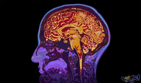 العلماء يكشفون عن شبكات الخلايا العصبية لتتبع سرعة الإيقاع
