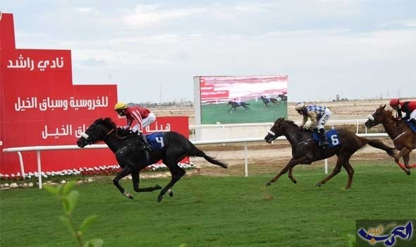"""62 جوادًا ومنافسات مرتقبة على كؤوس """"جيبك"""" والحصان العربي"""